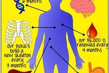 HEALTH: DISEASE / This Board is dedicated to Understanding Physical Diseases & Disorders.