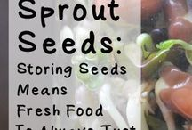 FOOD: SPROUTS & SEEDS / This Board is dedicated to Growing & Using Sprouts to increase Nutrition and Healing; and everything you might want to know about Seeds!