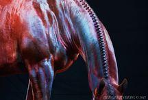 Horses. / by Michelle Hof