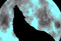 Brother Wolf, Sister Moon