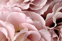 Blush / Shades of Pink