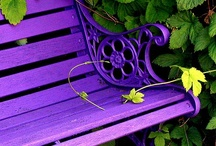 garden. / Gardening.  / by Pamela