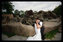 Weddings at Brookfield Zoo
