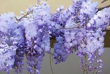 Garden & Flowers / by Monique Robinson