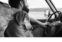 Animals / by Brad Tanner