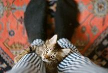 Cats Are Cute / by Anna Cooke