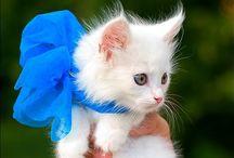 cute animals / by Maci Prejean