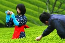 In the Tea Gardens / by The Taste of Tea