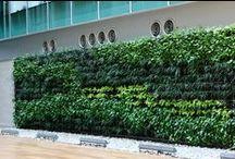 Green Walls by Verdegreen / Green Walls in Panamá