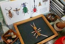 Insect Unit Study / Activities and printables for an insect theme for homeschool or classroom