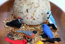 Bird Unit Study / Activities for a bird unit study for multiple ages