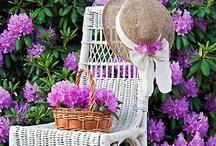 Gardening / by Janie Wise-Wilson