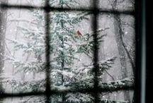 Winter holiday / by Maria J Pérez Cuervo