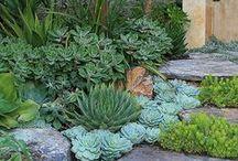 Garden / by Linda Wagner