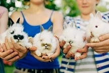 Cute Animals / Pretty much obsessed with bunnies, French bulldogs, and other cute critters / by Thảo Phi
