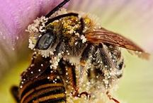 to bees or beekeepers ... / bees and beekeepers ... Bienen und Imker ... Warm Welcome to this group board ... and ... Happy Pinning. Frank / by Susan Felmer