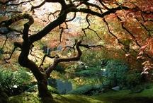 My Secret Garden..