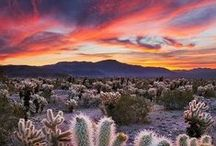 Palm Springs Outdoors / Palm Springs enjoys over 350 days of sunshine, so there is always an opportunity to explore the outdoors, weather that be local or a day trip to Joshua Tree.