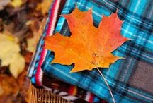 Fall / The leaves, the clothes, the food, the rain, the smell, the football. Gosh, I love fall and can't wait for it! If it could be fall all year long, I would be a happy camper