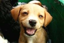 CUTEST EVER: future doggies :)