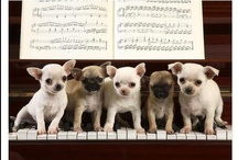 it's a dogs life.......=) / by Cindy Clark Ellison