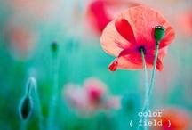 colors / by Sharon Scherbinski