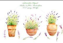 Watercolor & illustrations