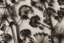 Motif floral nature