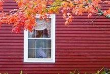 Fall / by Rachel Lobo