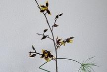 ikebana, flower arrangement / by Marinsky