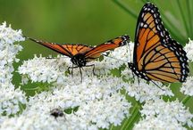 Blooms and Butterflies - Art and Photos