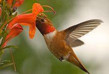 Fascinating Hummingbirds