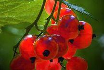 Berries, Fruit, Vegetables - Photos