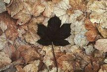 Autumn / by Sarah Prall