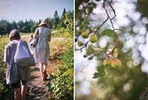 picnic / by Sarah Prall