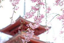 和 - Japanese culture -