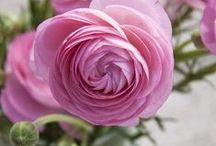 Flowers / by Pamela Flannery Stevens