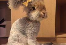 Cute Animals / by Pamela Flannery Stevens