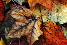 Fall & Winter / by Heather Stanford