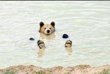 ▲ Adorable Animals ▲