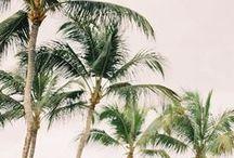 ◊ Paradise ◊