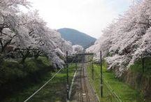 山北サクラトンネル (cobachiyann) / Japanese