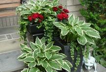 Outdoor/Indoor Gardening and Design / by Carrie Stalter Hiser