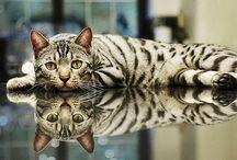 Cats / by Samantha Kincaid