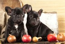 Dogs / Links to articles on dogs: health, nutrition, training, care, recipes etc.