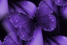 P comme Papillons