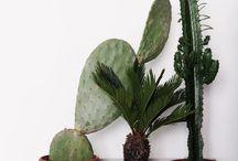 Home | Plants