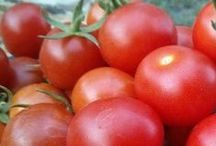 Gardening in Arizona / Gardening in Arizona / by Slap Dash Mom (blogging + tutorials)