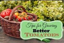 Gardening / From small to large gardening sizes, when to grow and what not to grow, soil PH and taking care of pests. Board overseen by Whynotmom.com #Gardening #compost #organic #gmo #environment #spring #produce #health / by Tonia L. Clark of whynotmom.com