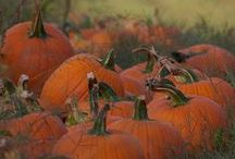 ♥ Pumpkins and Leaves